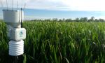 Station météo Weenat - maïs